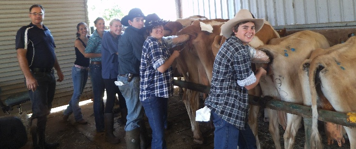 Artificial insemination in cattle advantages